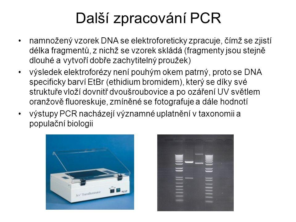 Další zpracování PCR namnožený vzorek DNA se elektroforeticky zpracuje, čímž se zjistí délka fragmentů, z nichž se vzorek skládá (fragmenty jsou stejn