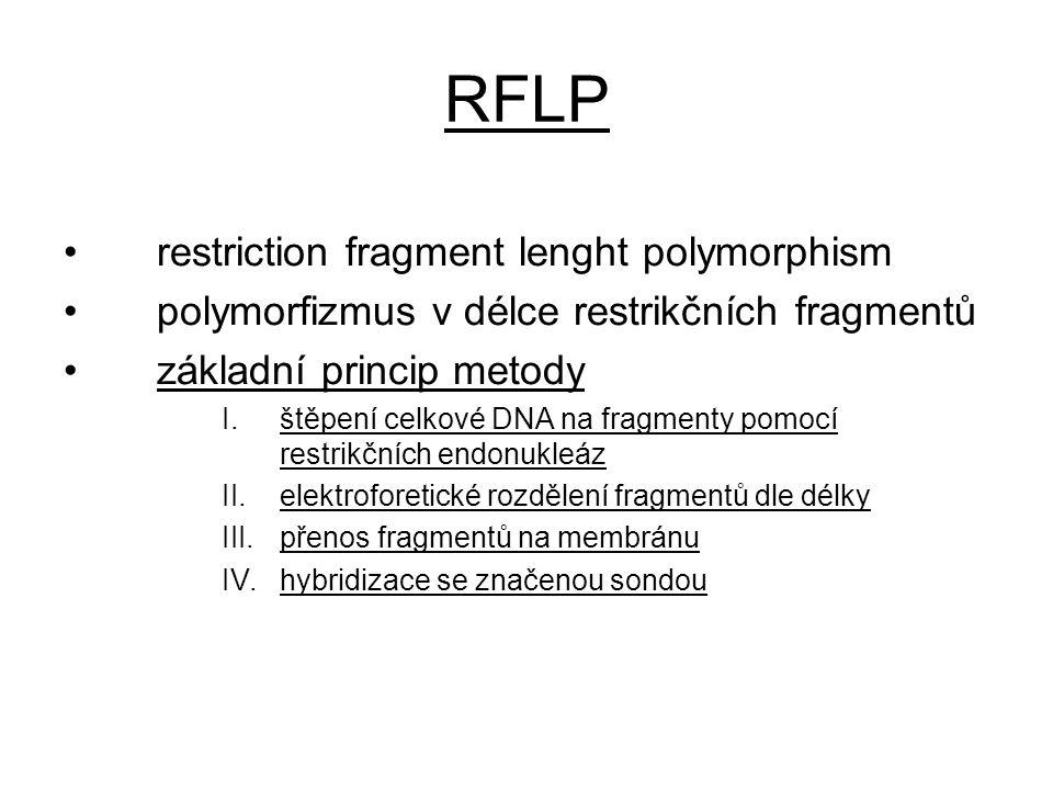 RFLP restriction fragment lenght polymorphism polymorfizmus v délce restrikčních fragmentů základní princip metody I.štěpení celkové DNA na fragmenty