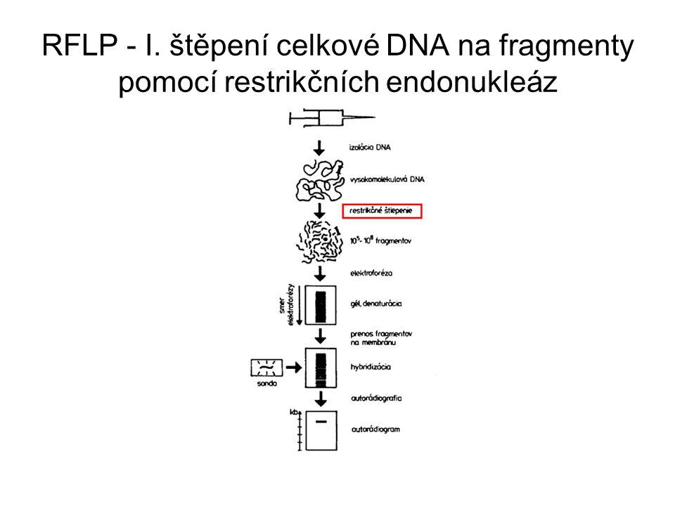 Štěpení celkové DNA na fragmenty pomocí restrikčních endonukleáz restrikční endonukleázy jsou enzymy izolované z bakterií jméno podle názvu bakterie, z které byl izolován (např.: EcoRI - Escherischia coli, AluI - Arthrobacter luteus) rozeznávají určitou sekvenci DNA a podle ní DNA specificky štěpí tato sekvence DNA tvoří palindrom - je symetrická kolem centrálního bodu sekvence sestává nejčastěji z 4 bp (base pair - pár bází) nebo 6 bp EcoRI - AluI -