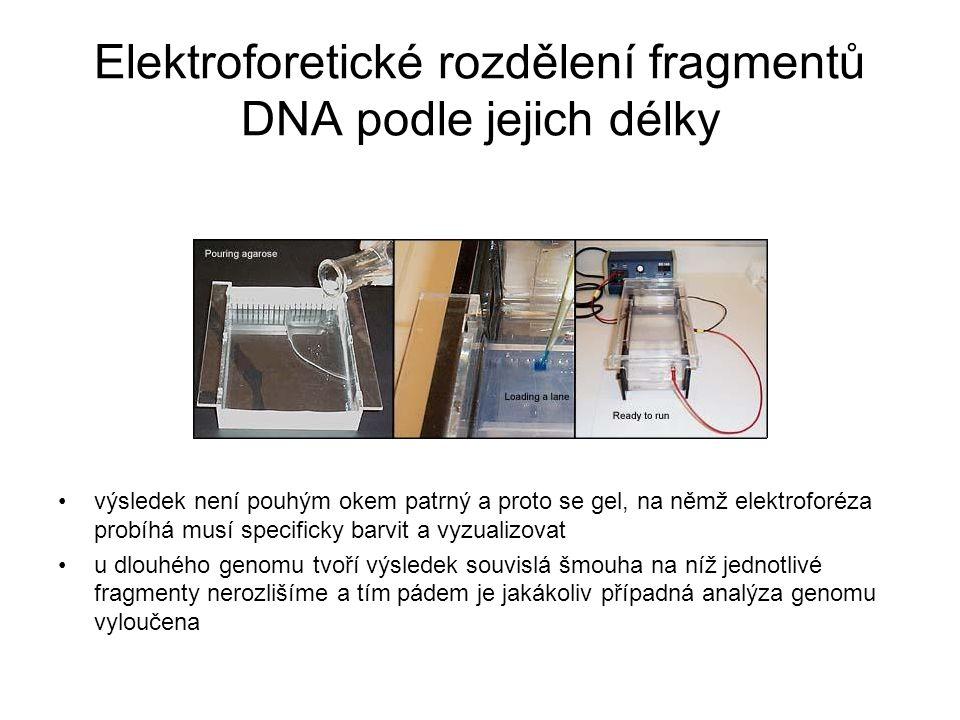 Elektroforetické rozdělení fragmentů DNA podle jejich délky výsledek není pouhým okem patrný a proto se gel, na němž elektroforéza probíhá musí specif
