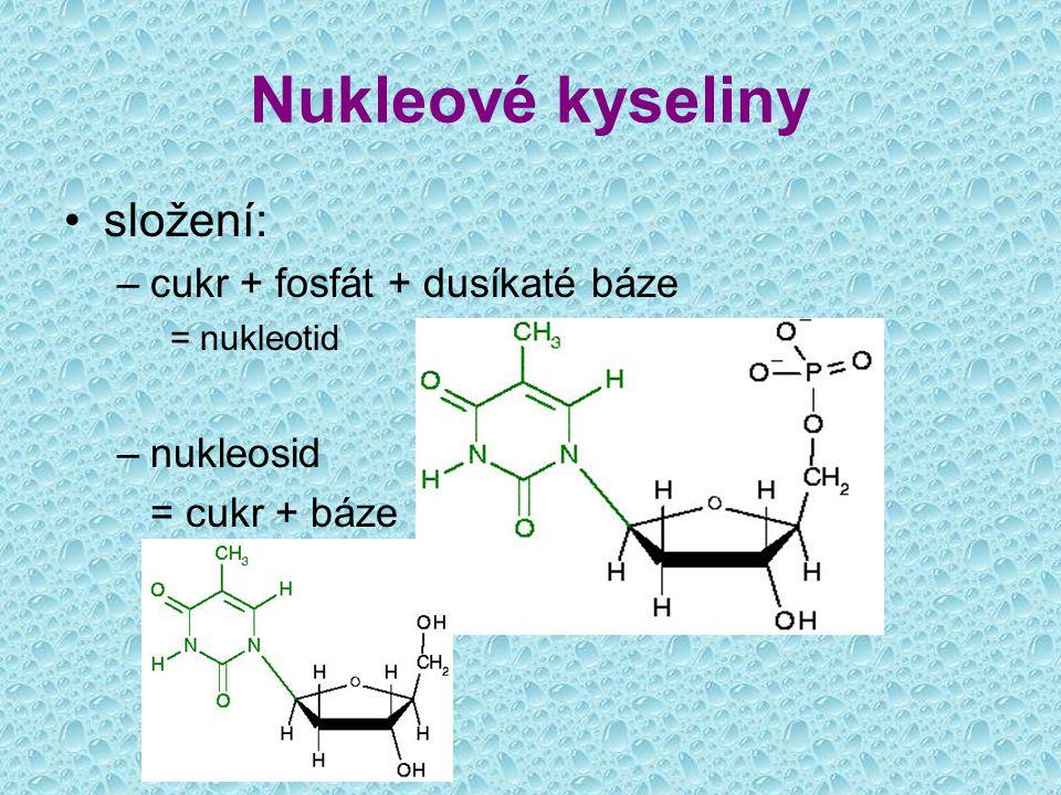 složení: –cukr + fosfát + dusíkaté báze = nukleotid –nukleosid = cukr + báze Nukleové kyseliny