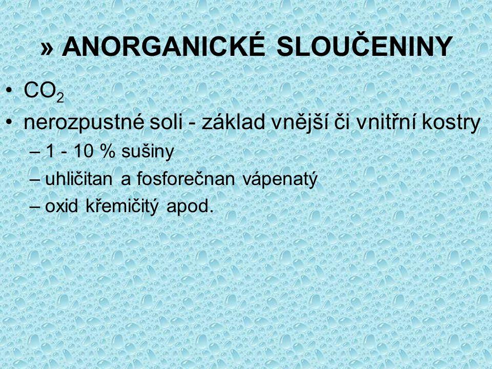» ANORGANICKÉ SLOUČENINY CO 2 nerozpustné soli - základ vnější či vnitřní kostry –1 - 10 % sušiny –uhličitan a fosforečnan vápenatý –oxid křemičitý ap