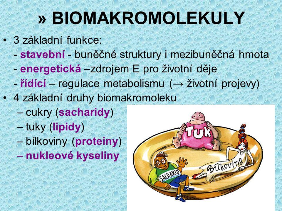Sacharidy 9% těla rychlý zdroj energie (glykogen) zásobní funkce (škrob, glykogen) stavební funkce (celulóza, chitin) polyhydroxyderiváty aldehydů nebo ketonů monosacharidymonosacharidy –(5 nebo 6 C) –glukóza (hroznový cukr), fruktóza (ovocný cukr), galaktóza –ribóza, deoxyribóza