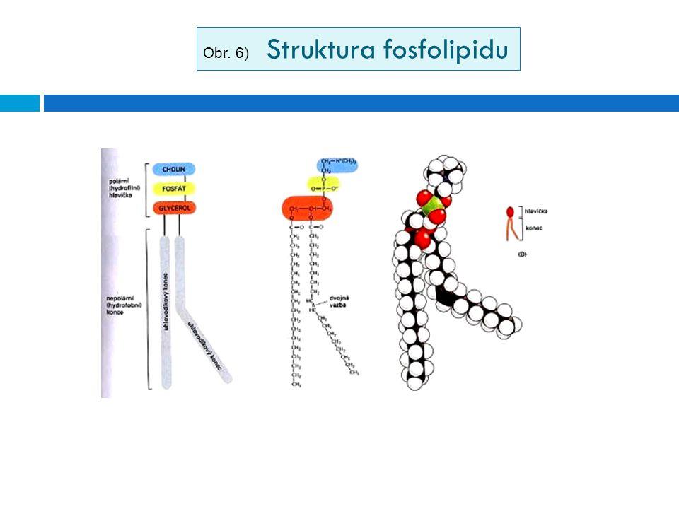Obr. 6) Struktura fosfolipidu