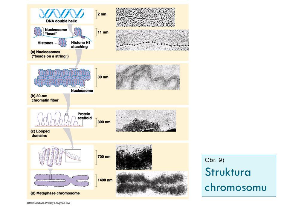 Obr. 9) Struktura chromosomu