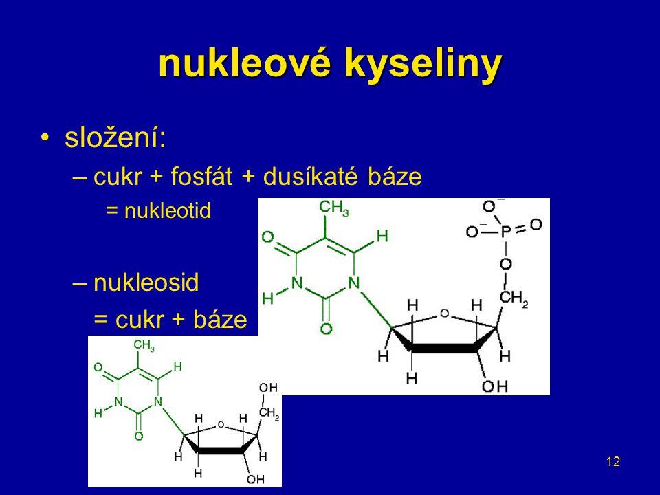 12 složení: –cukr + fosfát + dusíkaté báze = nukleotid –nukleosid = cukr + báze nukleové kyseliny