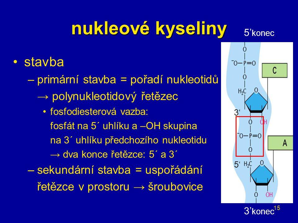 15 nukleové kyseliny stavba –primární stavba = pořadí nukleotidů v řetězci → polynukleotidový řetězec fosfodiesterová vazba: fosfát na 5´ uhlíku a –OH