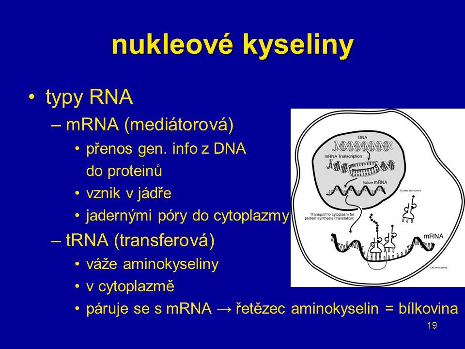 19 nukleové kyseliny typy RNA –mRNA (mediátorová) přenos gen. info z DNA do proteinů vznik v jádře jadernými póry do cytoplazmy –tRNA (transferová) vá