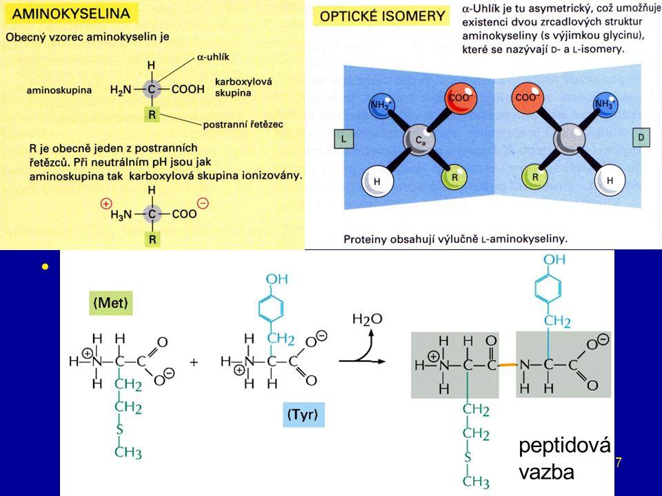 7 proteiny stavební látky, katalizátory (enzymy), transport (hemoglobin), obranné látky (imunoglobuliny, fibrinogen), řízení organismu (hormony), zdro
