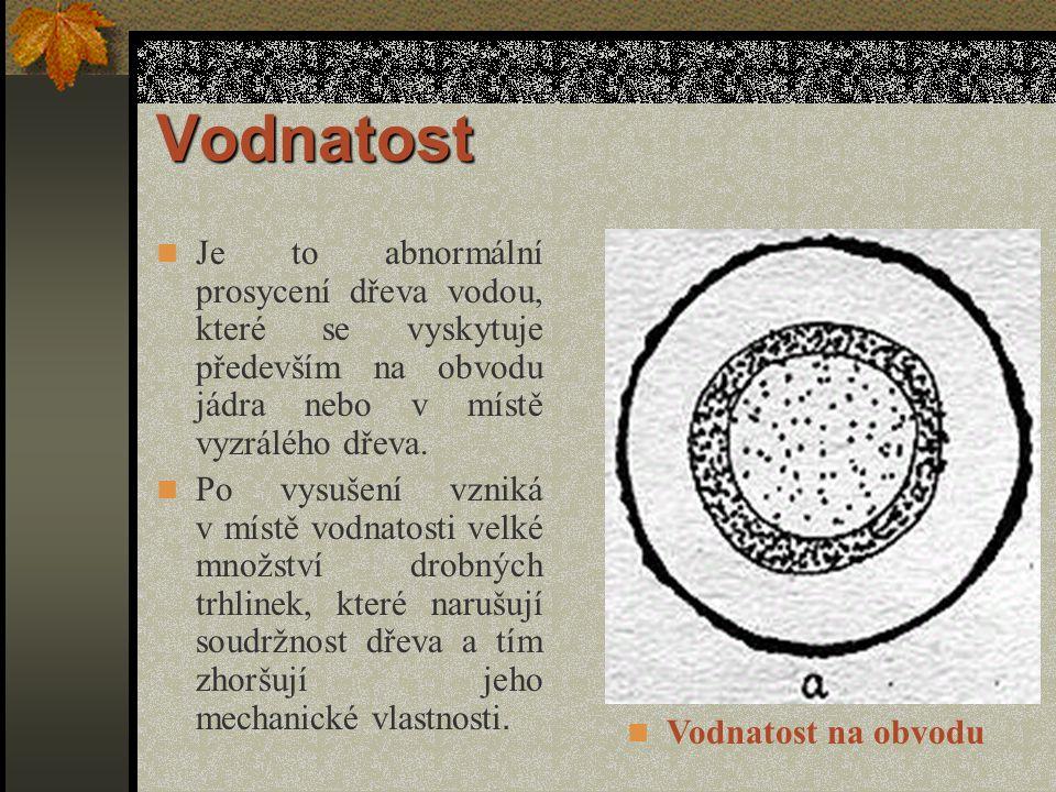 Reakční dřevo Dělí se na tlakové dřevo – křemenitost a tahové dřevo.