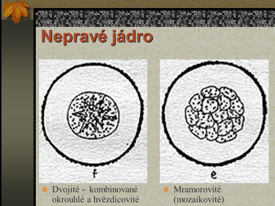 Nepravé jádro Okrouhlé s hnilobnou zónou (nahnilé) Dvojité okrouhlé