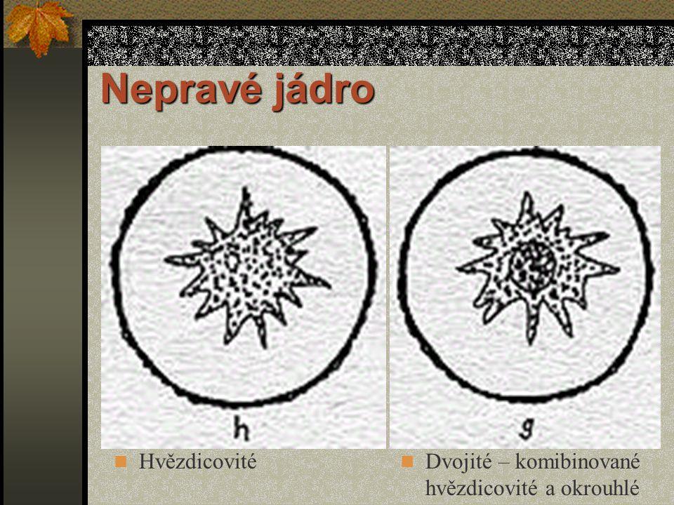 Nepravé jádro Mramorovité (mozaikovité) Dvojité - kombinované okrouhlé a hvězdicovité