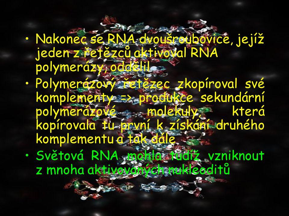 Nakonec se RNA dvoušroubovice, jejíž jeden z řetězců aktivoval RNA polymerázy, oddělil Polymerázový řetězec zkopíroval své komplementy => produkce sek