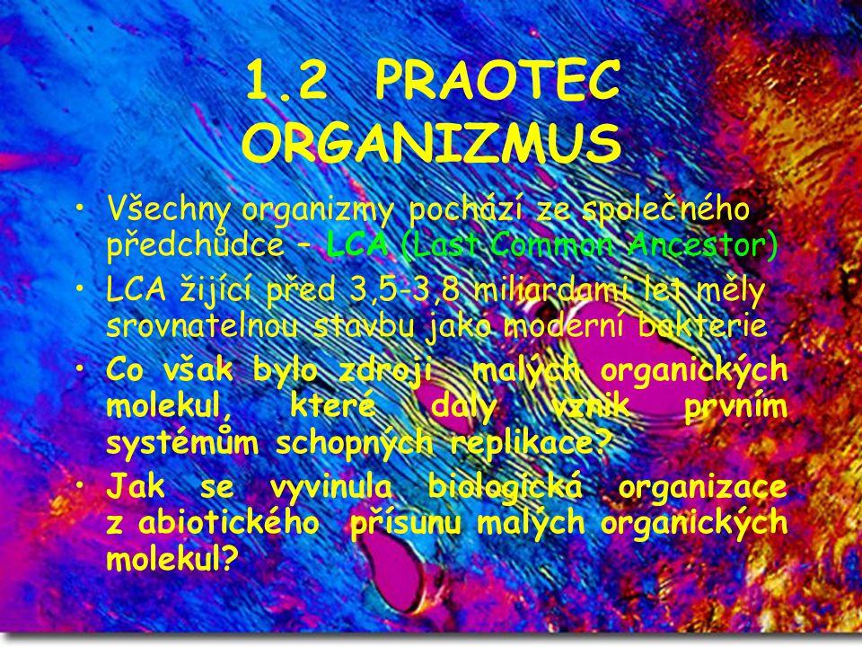 1.2 PRAOTEC ORGANIZMUS Všechny organizmy pochází ze společného předchůdce – LCA (Last Common Ancestor) LCA žijící před 3,5-3,8 miliardami let měly sro