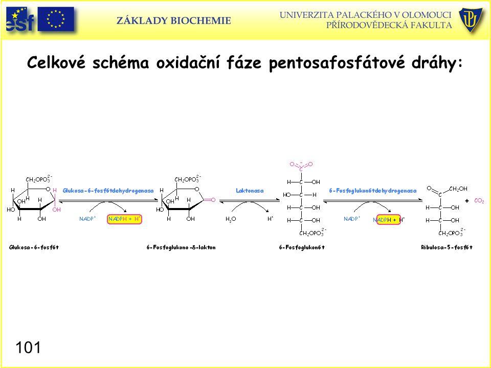 101 Celkové schéma oxidační fáze pentosafosfátové dráhy: