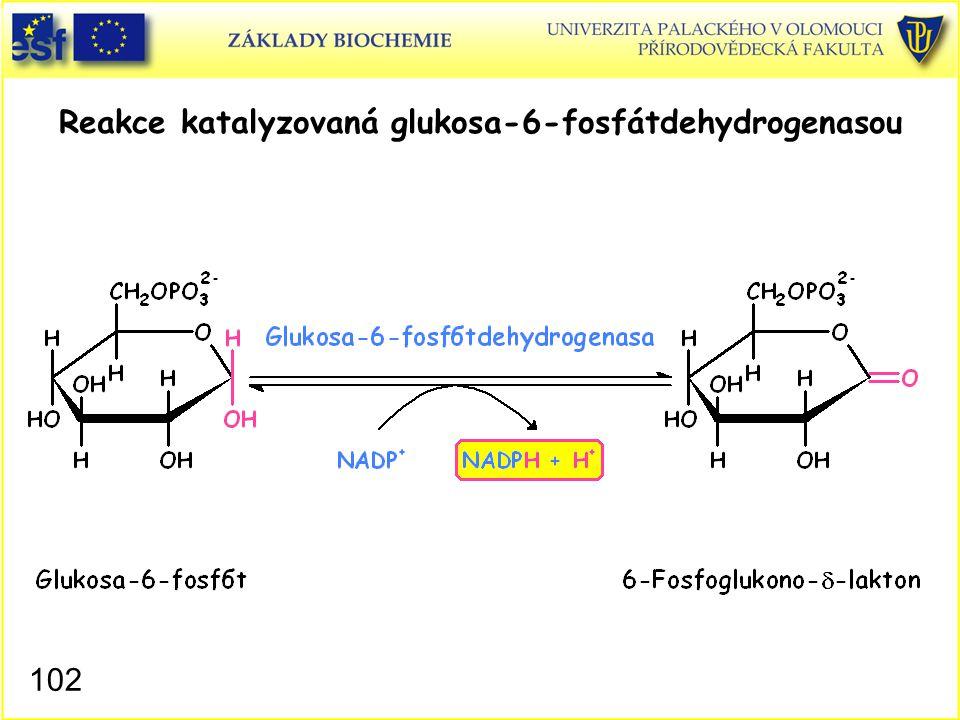 102 Reakce katalyzovaná glukosa-6-fosfátdehydrogenasou