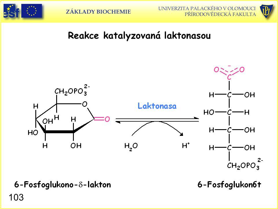 103 Reakce katalyzovaná laktonasou