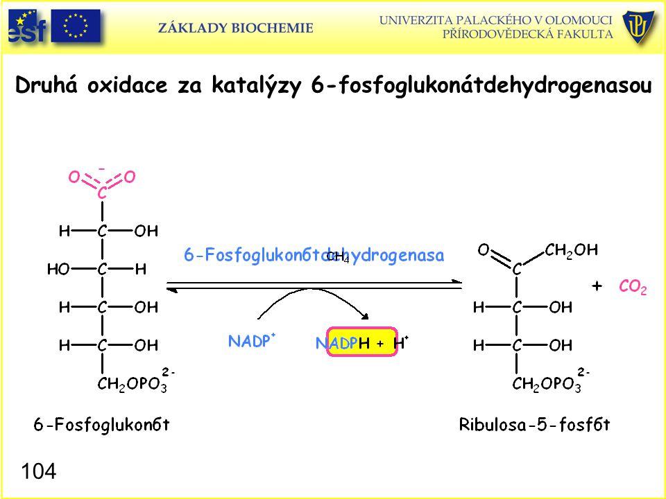 104 Druhá oxidace za katalýzy 6-fosfoglukonátdehydrogenasou