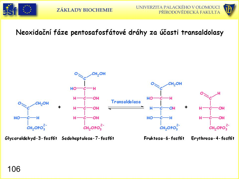106 Neoxidační fáze pentosafosfátové dráhy za účasti transaldolasy