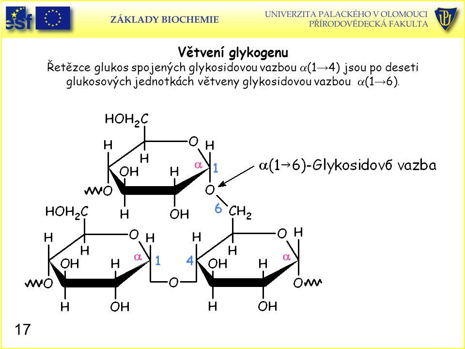 17 Větvení glykogenu Řetězce glukos spojených glykosidovou vazbou  (1 → 4) jsou po deseti glukosových jednotkách větveny glykosidovou vazbou  (1 → 6