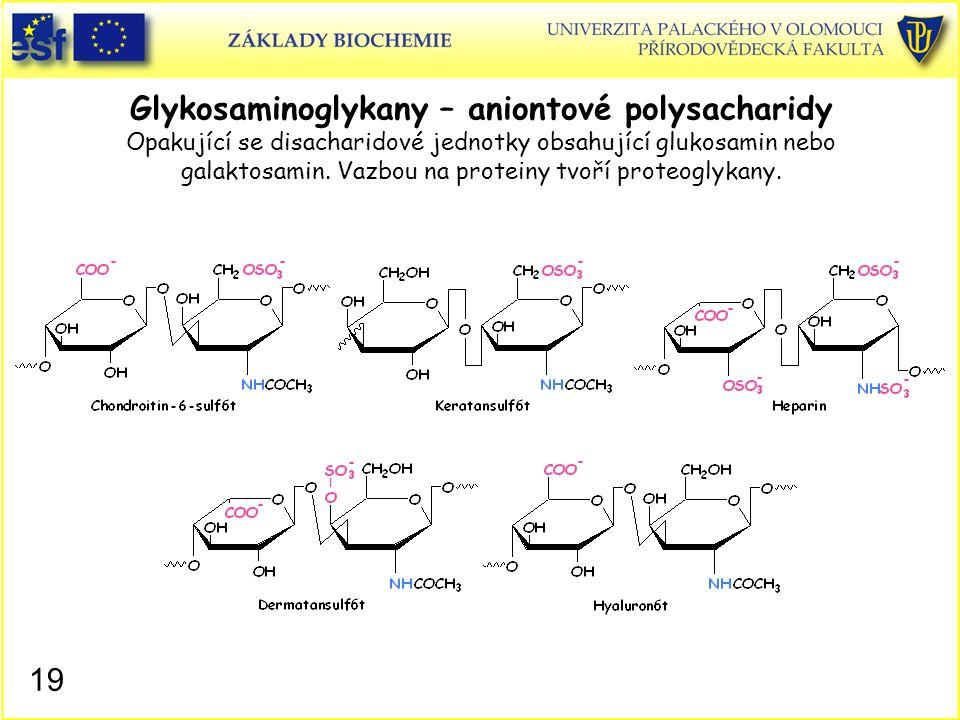 19 Glykosaminoglykany – aniontové polysacharidy Opakující se disacharidové jednotky obsahující glukosamin nebo galaktosamin. Vazbou na proteiny tvoří