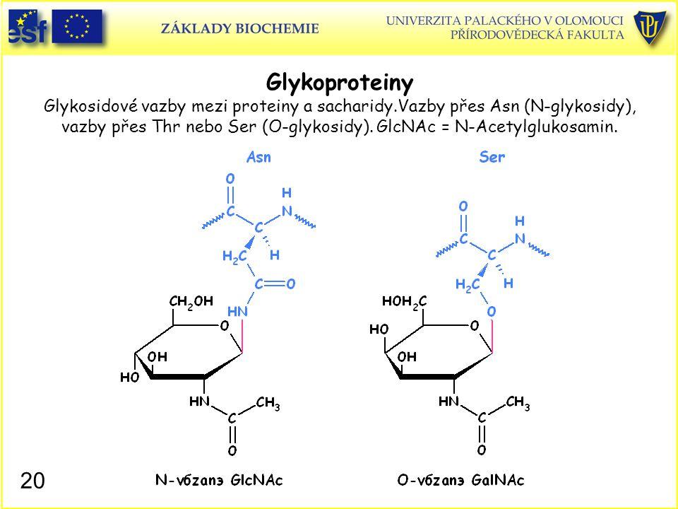 20 Glykoproteiny Glykosidové vazby mezi proteiny a sacharidy.Vazby přes Asn (N-glykosidy), vazby přes Thr nebo Ser (O-glykosidy). GlcNAc = N-Acetylglu