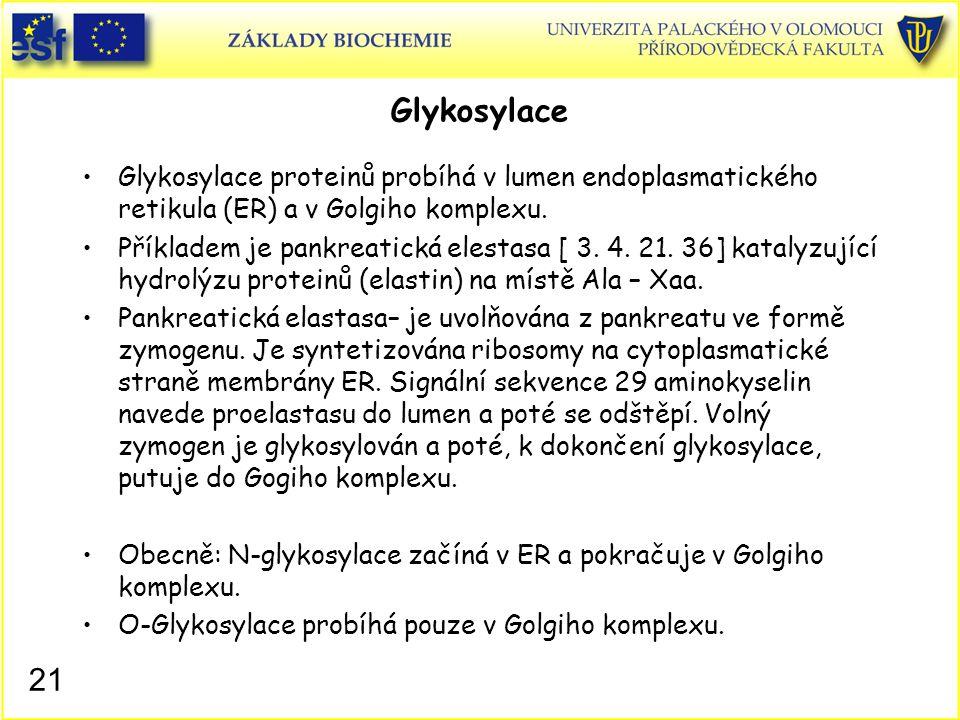 21 Glykosylace Glykosylace proteinů probíhá v lumen endoplasmatického retikula (ER) a v Golgiho komplexu. Příkladem je pankreatická elestasa [ 3. 4. 2