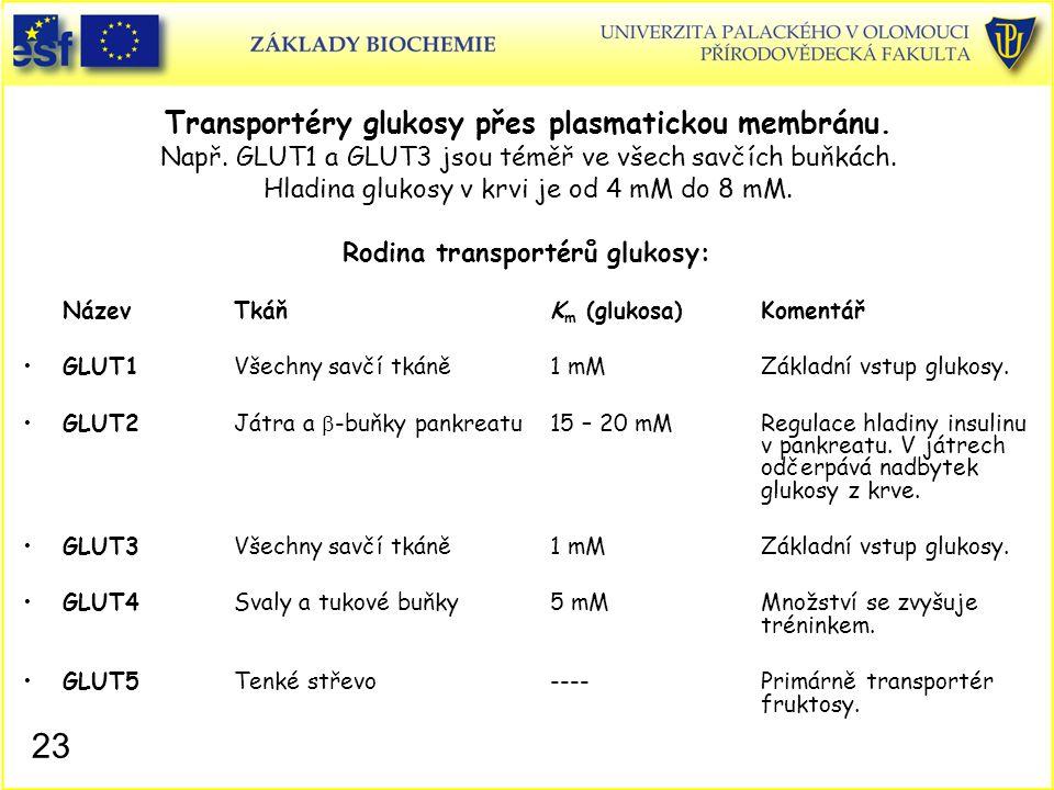23 Transportéry glukosy přes plasmatickou membránu. Např. GLUT1 a GLUT3 jsou téměř ve všech savčích buňkách. Hladina glukosy v krvi je od 4 mM do 8 mM