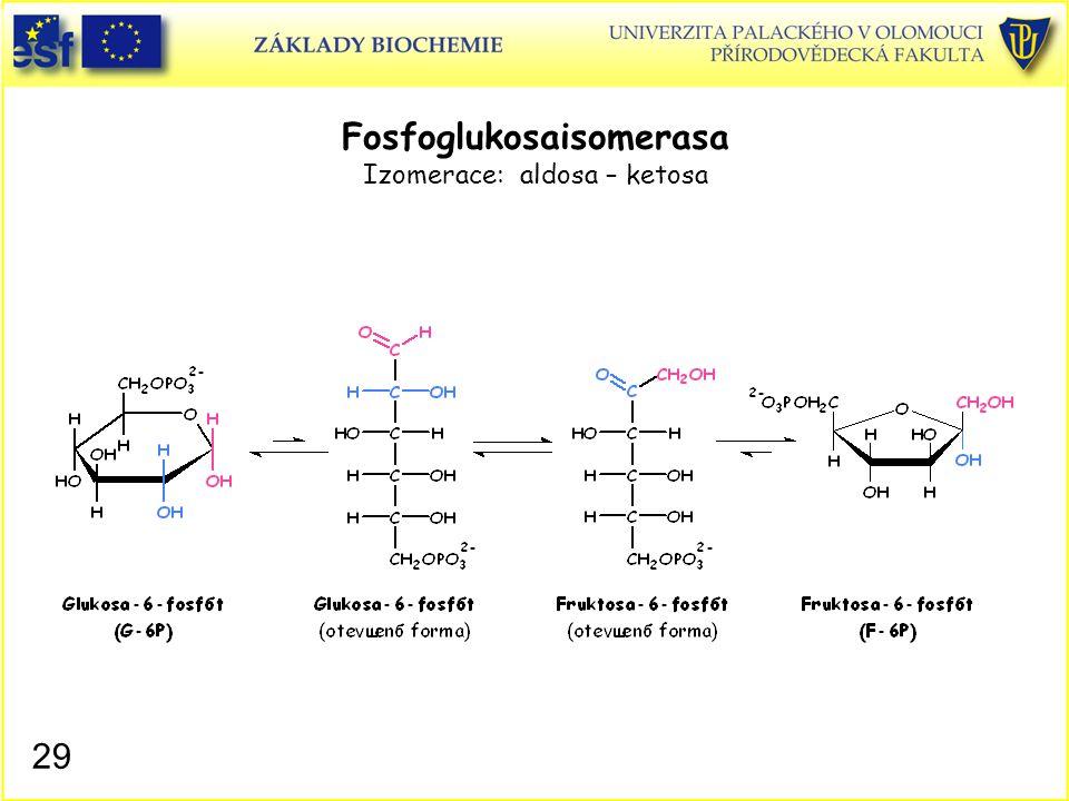 29 Fosfoglukosaisomerasa Izomerace: aldosa – ketosa