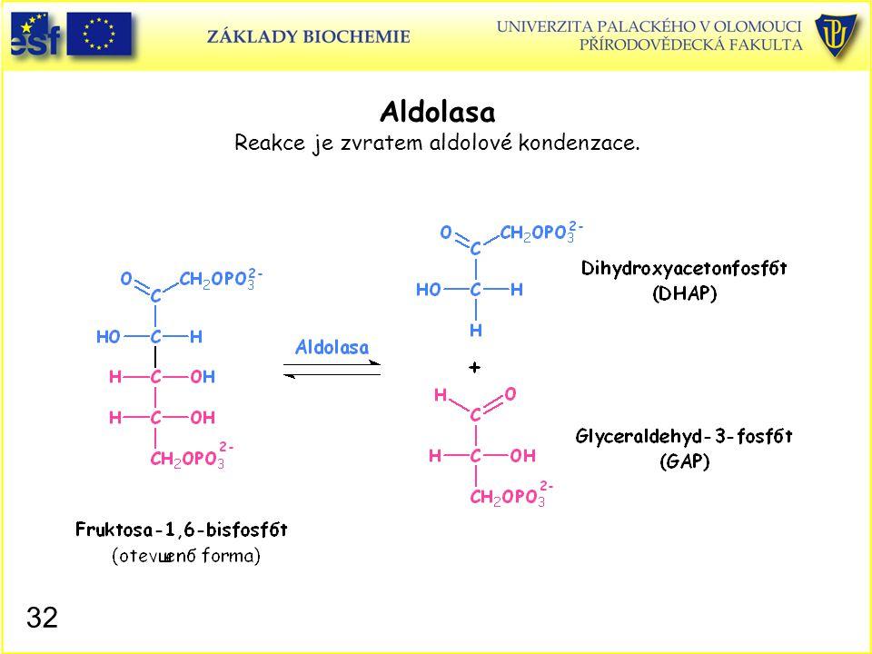 32 Aldolasa Reakce je zvratem aldolové kondenzace.