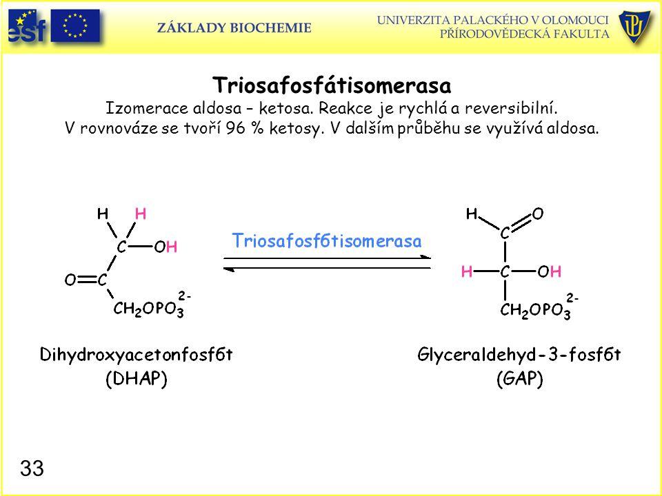 33 Triosafosfátisomerasa Izomerace aldosa – ketosa. Reakce je rychlá a reversibilní. V rovnováze se tvoří 96 % ketosy. V dalším průběhu se využívá ald