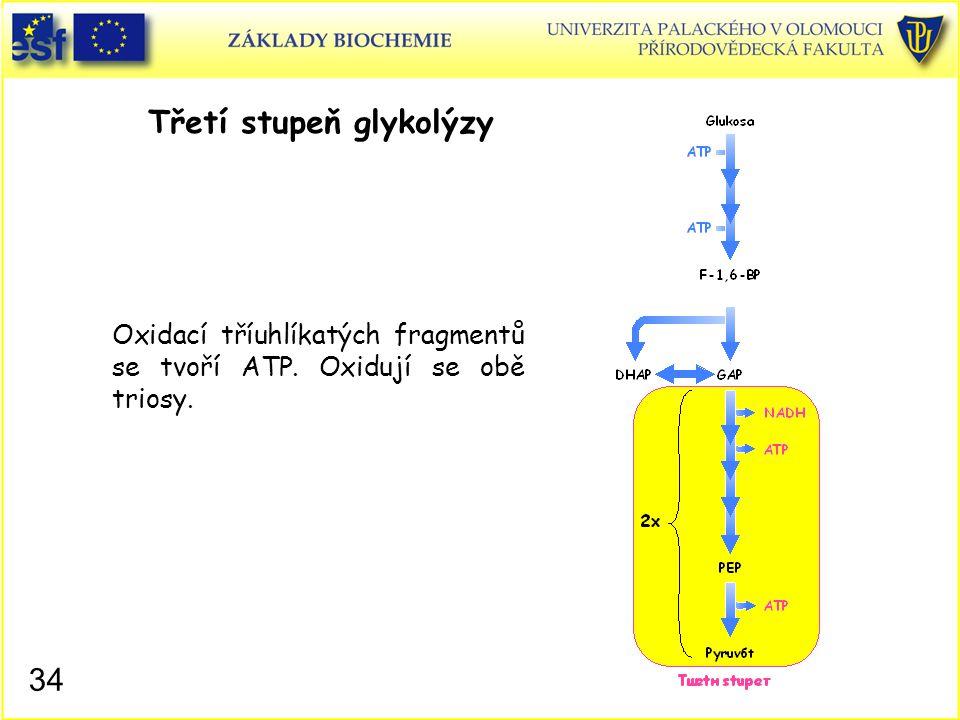 34 Třetí stupeň glykolýzy Oxidací tříuhlíkatých fragmentů se tvoří ATP. Oxidují se obě triosy.