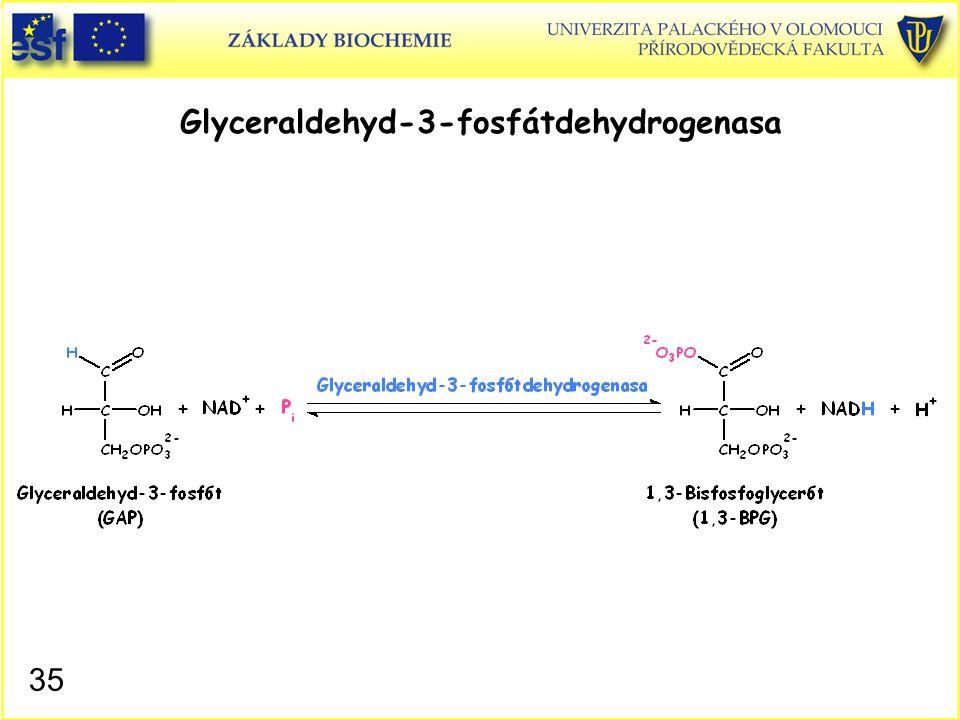 35 Glyceraldehyd-3-fosfátdehydrogenasa