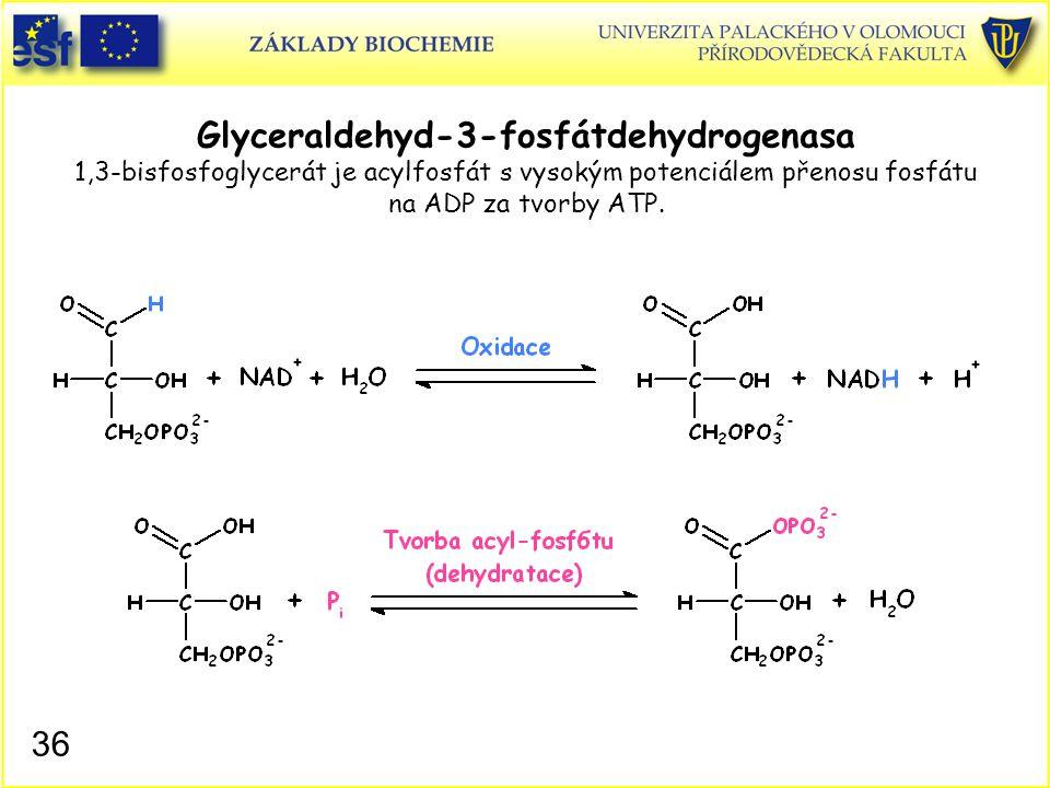 36 Glyceraldehyd-3-fosfátdehydrogenasa 1,3-bisfosfoglycerát je acylfosfát s vysokým potenciálem přenosu fosfátu na ADP za tvorby ATP.