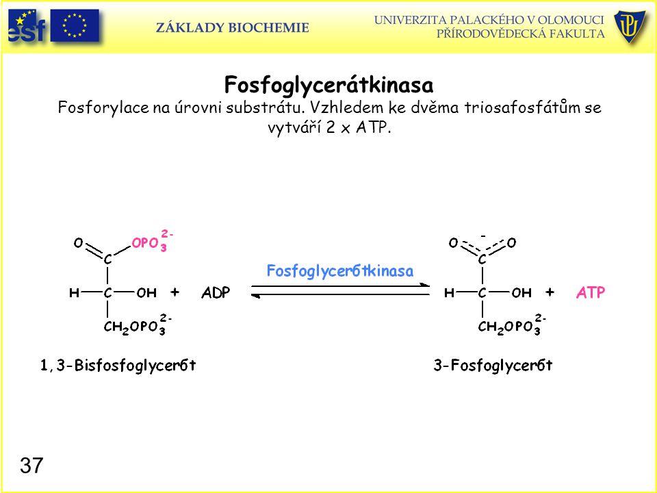 37 Fosfoglycerátkinasa Fosforylace na úrovni substrátu. Vzhledem ke dvěma triosafosfátům se vytváří 2 x ATP.