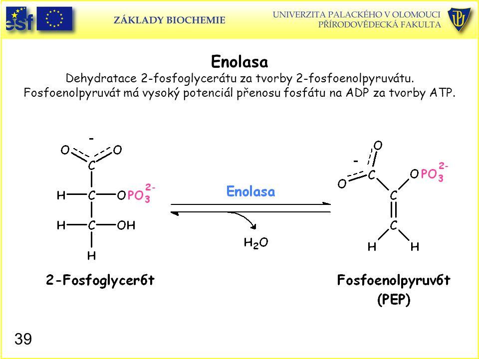 39 Enolasa Dehydratace 2-fosfoglycerátu za tvorby 2-fosfoenolpyruvátu. Fosfoenolpyruvát má vysoký potenciál přenosu fosfátu na ADP za tvorby ATP.