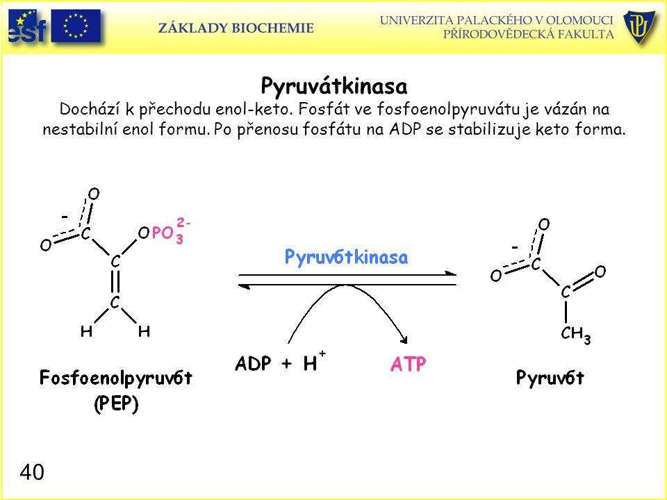 40 Pyruvátkinasa Dochází k přechodu enol-keto. Fosfát ve fosfoenolpyruvátu je vázán na nestabilní enol formu. Po přenosu fosfátu na ADP se stabilizuje