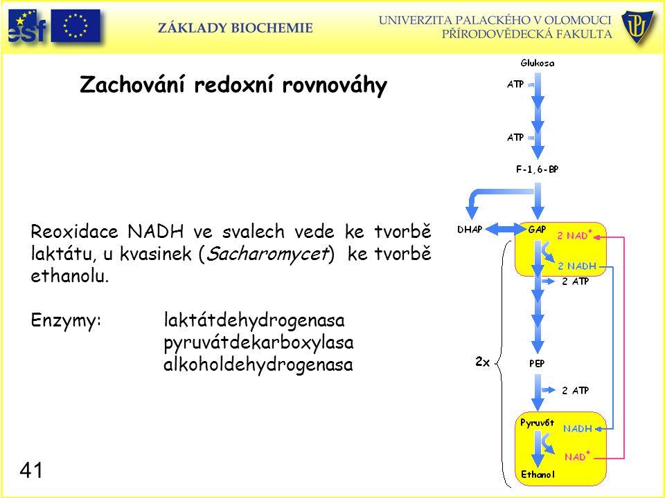 41 Zachování redoxní rovnováhy Reoxidace NADH ve svalech vede ke tvorbě laktátu, u kvasinek (Sacharomycet) ke tvorbě ethanolu. Enzymy:laktátdehydrogen
