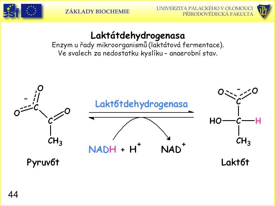 44 Laktátdehydrogenasa Enzym u řady mikroorganismů (laktátová fermentace). Ve svalech za nedostatku kyslíku – anaerobní stav.