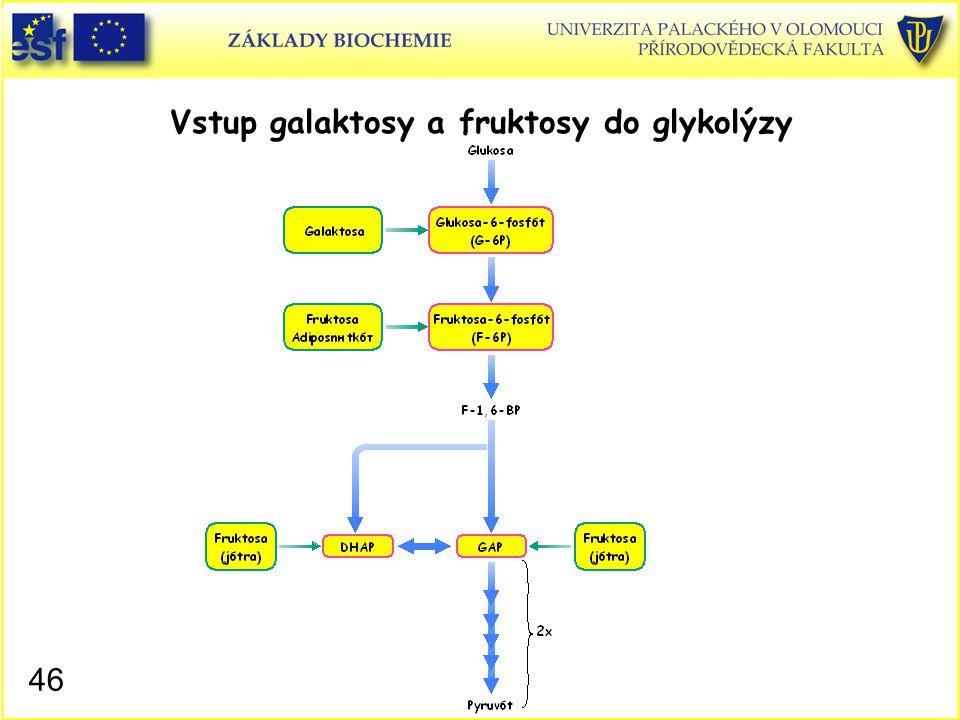 46 Vstup galaktosy a fruktosy do glykolýzy