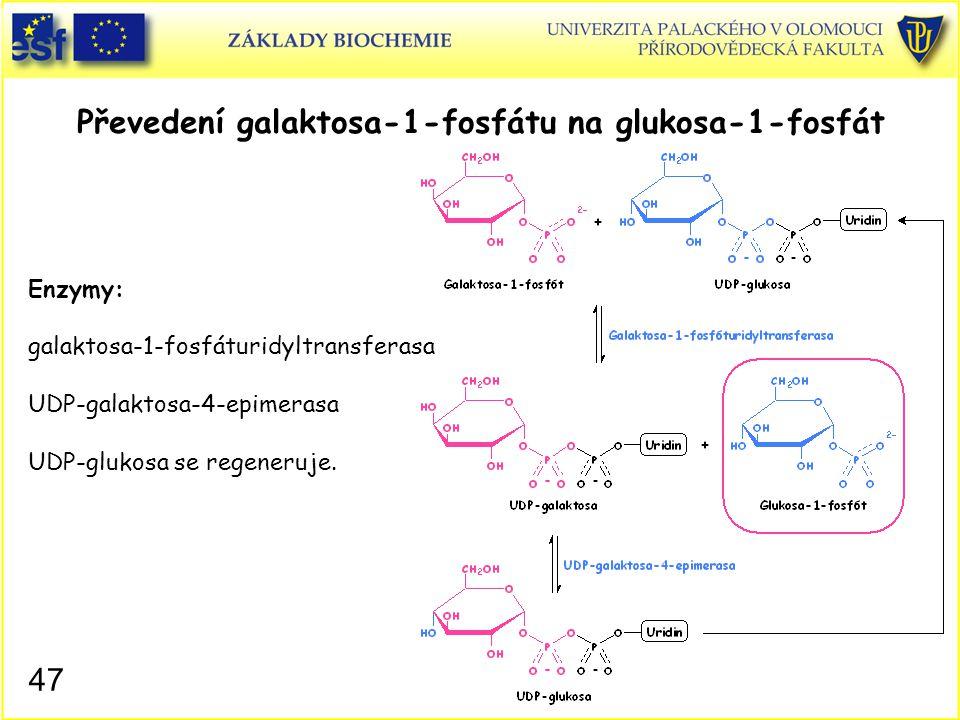 47 Převedení galaktosa-1-fosfátu na glukosa-1-fosfát Enzymy: galaktosa-1-fosfáturidyltransferasa UDP-galaktosa-4-epimerasa UDP-glukosa se regeneruje.