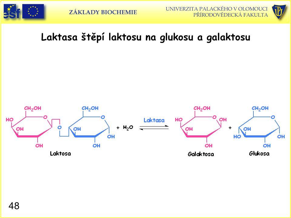 48 Laktasa štěpí laktosu na glukosu a galaktosu