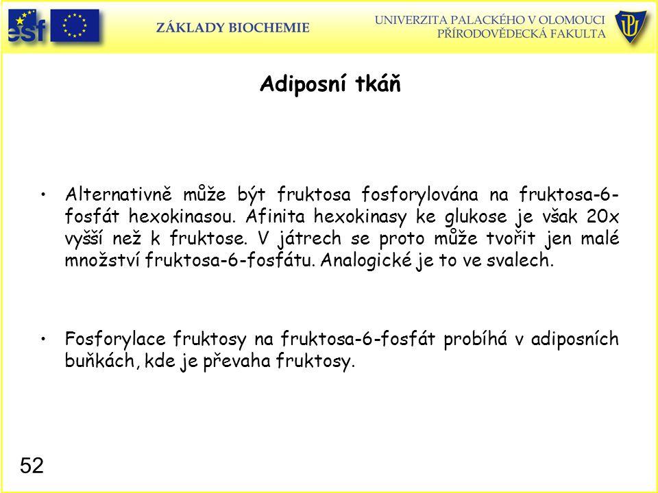 52 Adiposní tkáň Alternativně může být fruktosa fosforylována na fruktosa-6- fosfát hexokinasou. Afinita hexokinasy ke glukose je však 20x vyšší než k