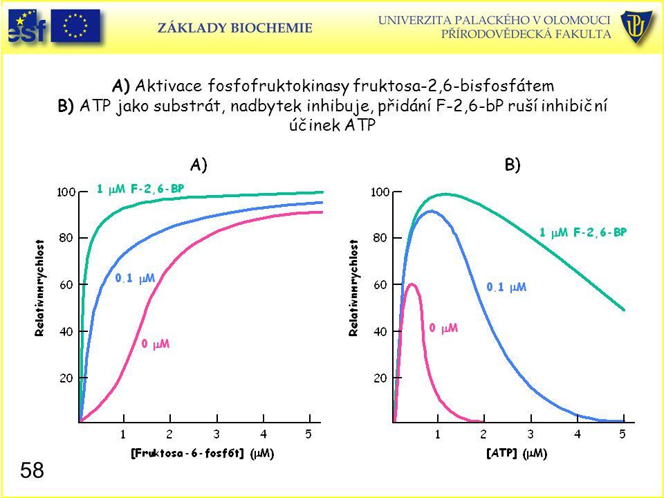 58 A) Aktivace fosfofruktokinasy fruktosa-2,6-bisfosfátem B) ATP jako substrát, nadbytek inhibuje, přidání F-2,6-bP ruší inhibiční účinek ATP
