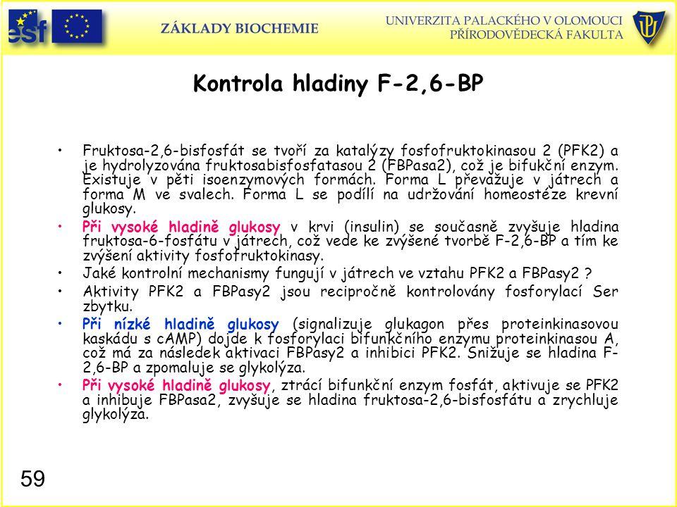 59 Kontrola hladiny F-2,6-BP Fruktosa-2,6-bisfosfát se tvoří za katalýzy fosfofruktokinasou 2 (PFK2) a je hydrolyzována fruktosabisfosfatasou 2 (FBPas