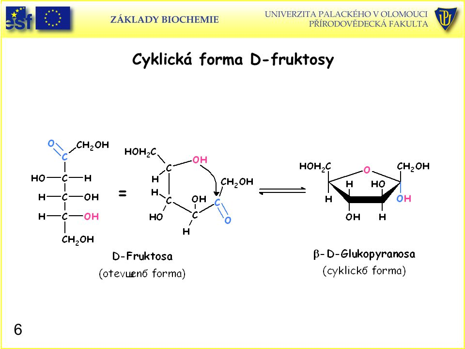 6 Cyklická forma D-fruktosy