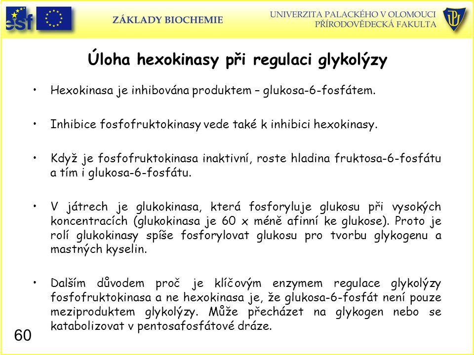 60 Úloha hexokinasy při regulaci glykolýzy Hexokinasa je inhibována produktem – glukosa-6-fosfátem. Inhibice fosfofruktokinasy vede také k inhibici he