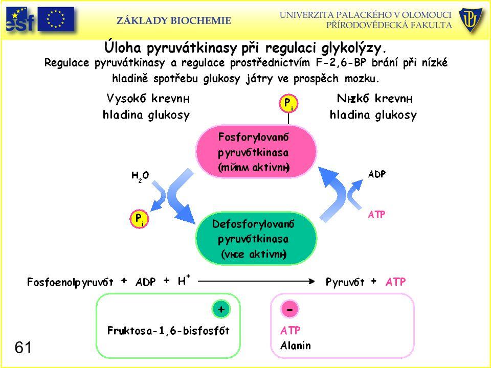 61 Úloha pyruvátkinasy při regulaci glykolýzy. Regulace pyruvátkinasy a regulace prostřednictvím F-2,6-BP brání při nízké hladině spotřebu glukosy ját