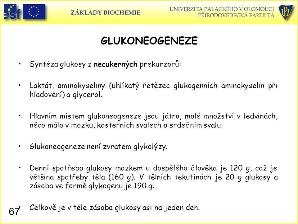 67 GLUKONEOGENEZE Syntéza glukosy z necukerných prekurzorů: Laktát, aminokyseliny (uhlíkatý řetězec glukogenních aminokyselin při hladovění) a glycero