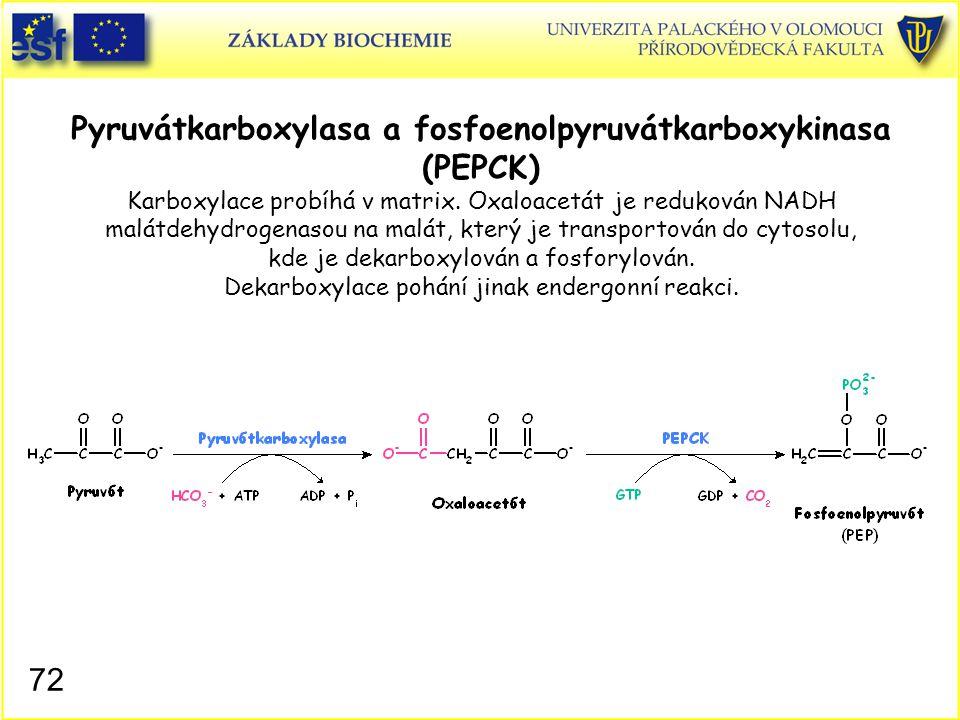 72 Pyruvátkarboxylasa a fosfoenolpyruvátkarboxykinasa (PEPCK) Karboxylace probíhá v matrix. Oxaloacetát je redukován NADH malátdehydrogenasou na malát